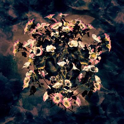 Magic Flowers 8 | 1:1