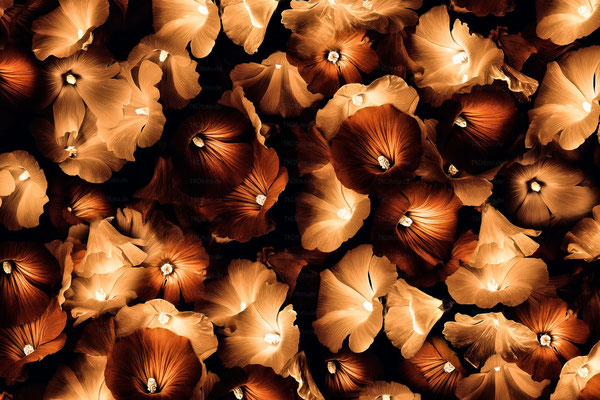 Magic Flowers 4 | 3:2