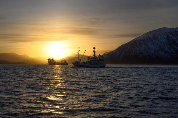 eine Flotte von Fischerbooten fährt mit uns in Richtung Norden um Heringe zu fangen