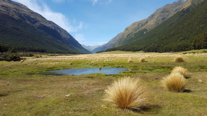 Im Greenstone Valley zur Mc Kellar Hut