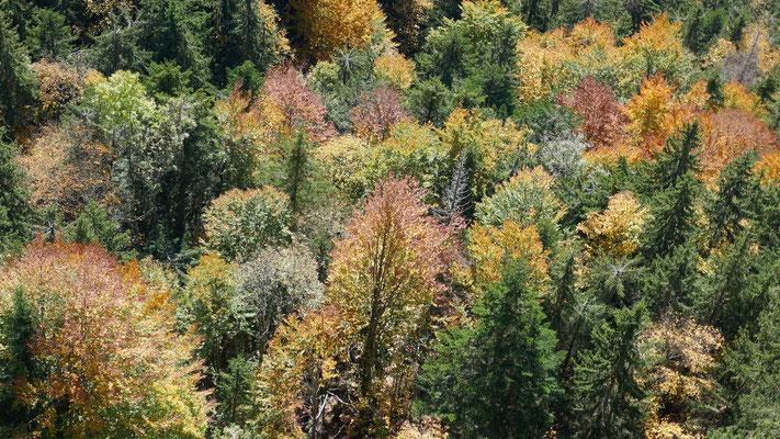 bunte Bäume im Herbst
