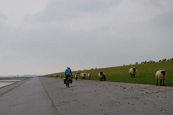 Linksverkehr auf dem Damm