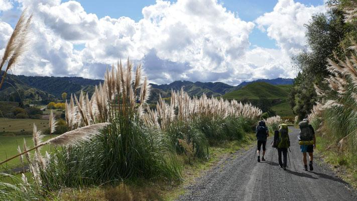 Timber Trail - Te Araroa