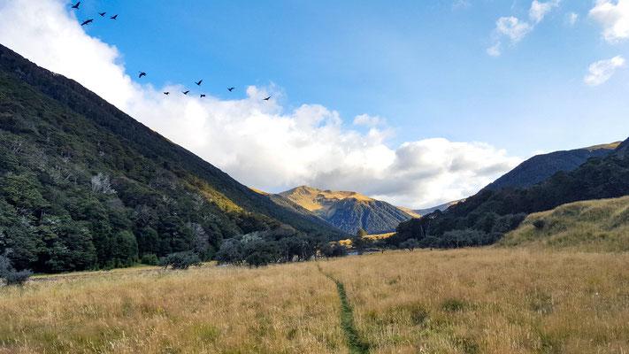 Weg zum Waiaupass am Te Araroa