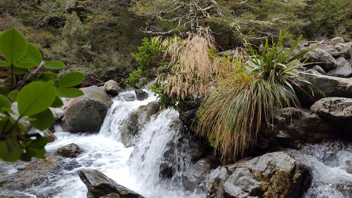 Te Araroa Nelson Lake National Park