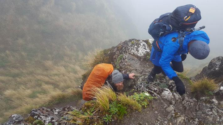 anspruchsvolles Gehen auf dem rutschigen Weg der Tararua Crossing