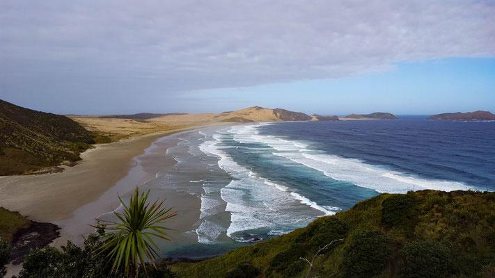 kurz vor dem Cape Reinga Te Araroa