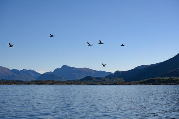 Abschied von Molde mit seinem wunderschönen Panorama