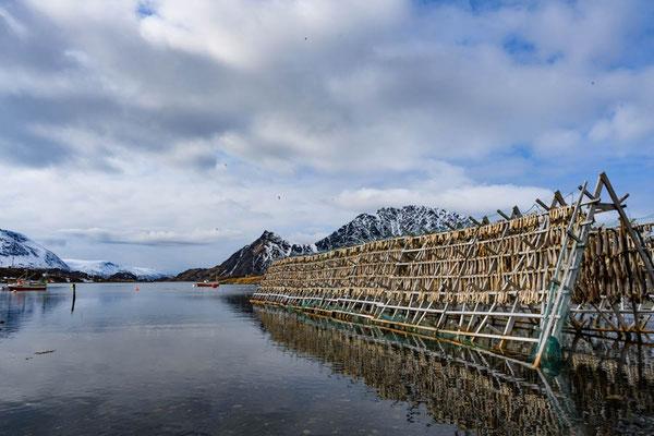 Trockenfischgestelle in Bergsfjord