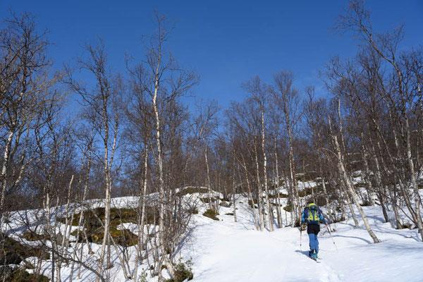 Unten im Wald beim Aufstieg zum Nomedalstinden ist nicht mehr so viel Schnee
