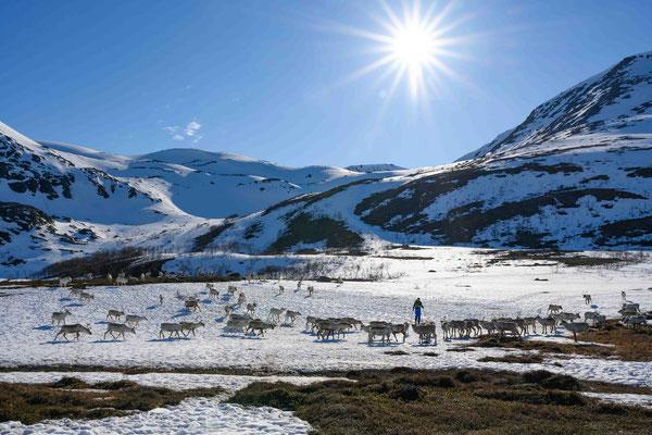 Skitouren mit Rentieren in Arnøya