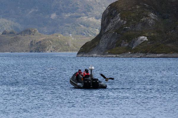 Adler füttern im Trollfjord