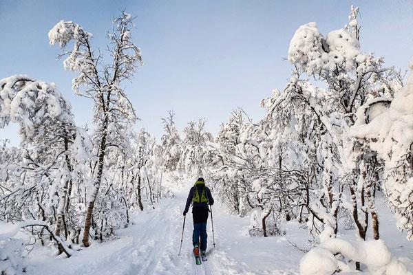 Aufstieg durch eine Schneise im Krüppelbirken Wald