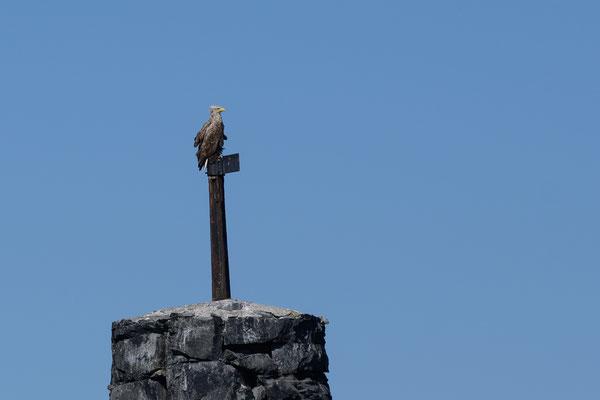 Die Adler warten auch schon auf Futter