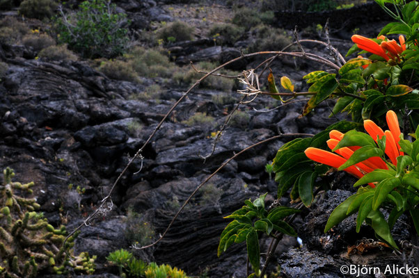 Karge Bedingungen 2, Lanzarote