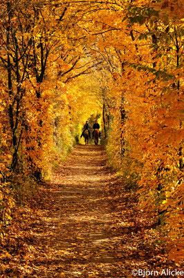 Herbststimmung 1, Heilbronn