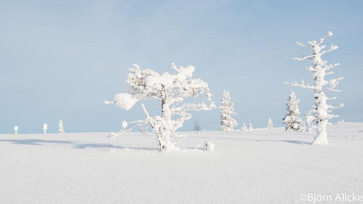 Traum in Weiß, Finnland