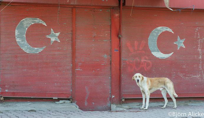 Wachhund, Istanbul