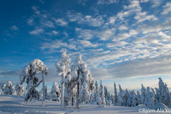 Winterwald 2, Finnland