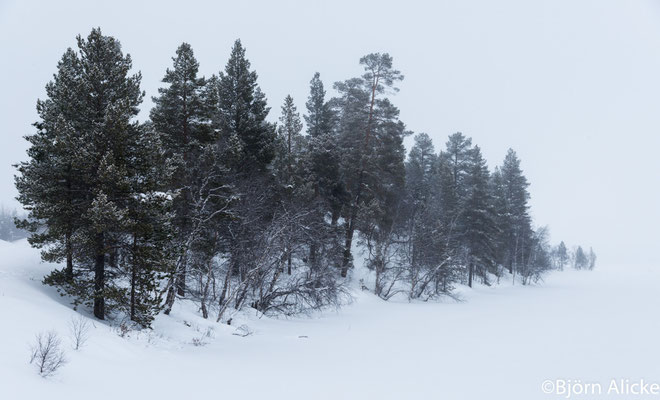Nebelwald, Finnland