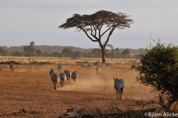 Tsavo NP 3 , Kenia