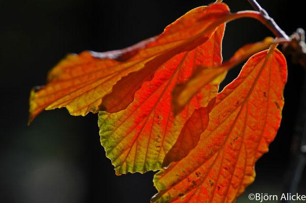 Herbststimmung 3, Heilbronn
