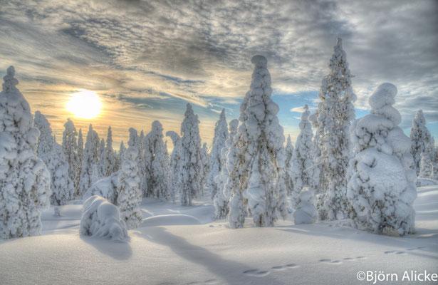 Winterwald 1, Finnland