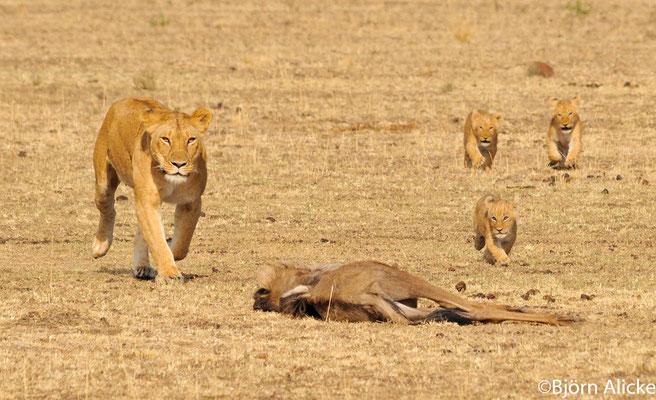 Jagdglück, Masai Mara, Kenia