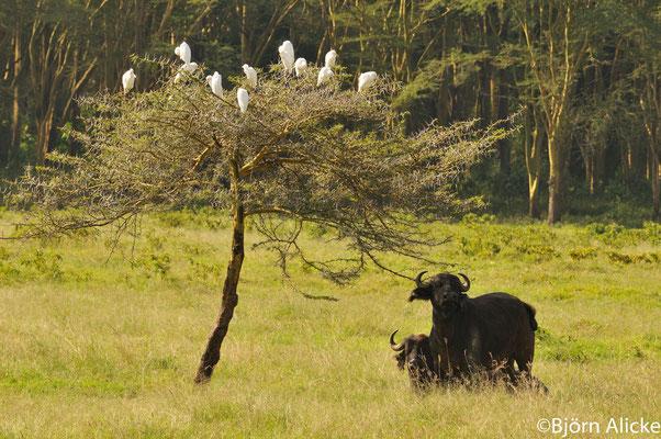 Nakuru See 4, Kenia