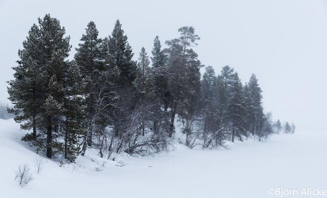 Winterlandschaft 2, Finnland