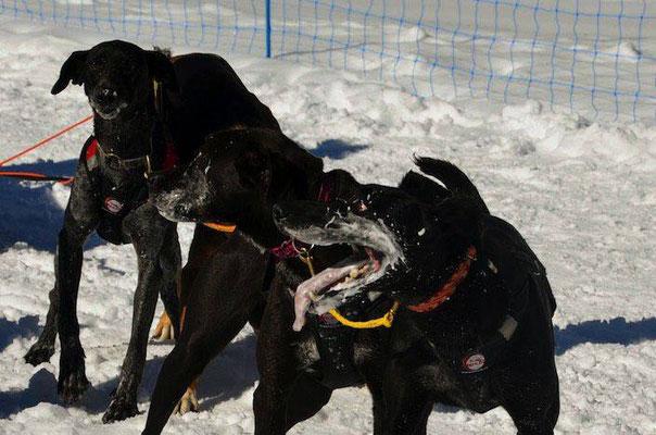 Plume/Kyle et Lumi/Tina a l'arrivé de GADMEN, 1er podium de la saison neige
