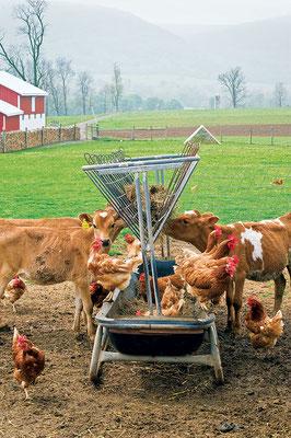 十分に設計された多種家畜の仕組みで、土壌の炭素を高めつつ農業生産効率を最大化できる。しかも共同の飼料場では決まって何ともワクワクさせられる。