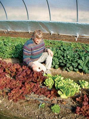筆者は冬の間すっとビニールハウスの中でレタスを栽培している。Photo by McCune Porter