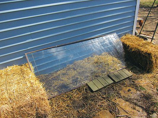 4. リサ・ロンバルド(ゾーン5b)は「レッドネック冷床」にガラスを立てかけて、晴れの日に熱気を逃す。