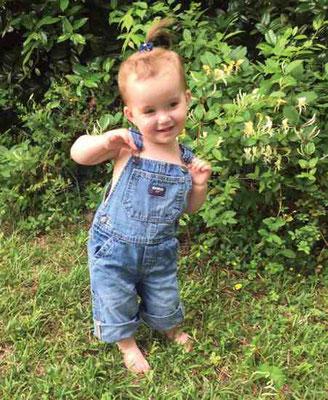 アドリアンヌ・レズリーの21ヶ月の娘、ノラは、ハニーサックルの蜜を味見し、水やりして、花の匂いをかぐのが大好き。Photo by Adrianne Lesley.