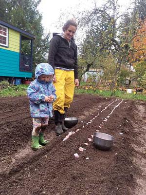 Matt Gordon の妹と彼の娘 Ayla がカリーご近所農園でニンニクを植え付けている。Photo by Matt Gordon