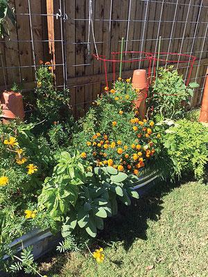 美しくて簡単に作れる菜園には、自分の裏庭で水桶揚げ床を試そう。Photo by Peggy Sweeney.