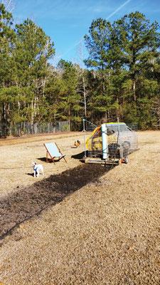 移動式の豚さん耕運機で、トラクターやその他の器 機がなくても地面を耕せる。