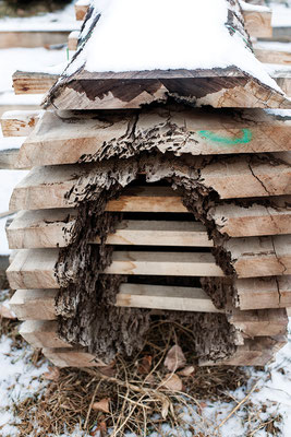 製材したクルミ材に、不安定要因となる腐敗が見られる。 Photo by Cara Baldwin.