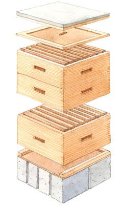 基本のラングストロース巣箱の構成は、蓋、カバー、貯蜜用スーパー2つと巣箱本体1つ(各箱内に取外せる巣枠)、底板、そしてコンクリートや木の土台で、これは地表から巣箱を浮かすもの。