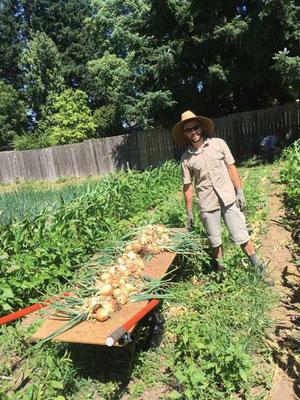 www.FarmHandCarts.com(筆者 Josh Volk の始めたプロジェクト)の特注の農園カートを使い、Martin Vandepas がカリーご近所農園でニンニクを収穫している。 Photo by Matt Gordon