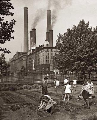 1944年7月のニューヨーク市:学校の戦時下菜園。First Ave. にて。