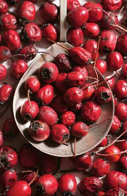 サンザサシの果実で心臓血管系統の状態を改善できる。Photo by Getty Images/studio22comua