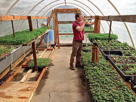 ポリシートの温室内(1日で作れる)は、栽培期間を伸ばし、効率のよい立たいスペースのある作業場になる。