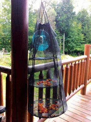 夏の太陽熱、虫を避ける網を活かす干し網。Photo by Tracy Chaleff