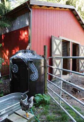 この貯水槽で筆者の小屋の金属屋根か ら雨水を集める。満杯になると、水は 家畜に流れ、その後、菜園へ。