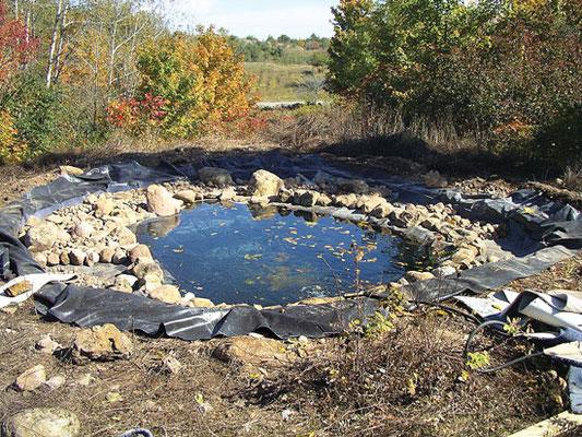 岩や小石を置き、水を浄化する微生物を養う。