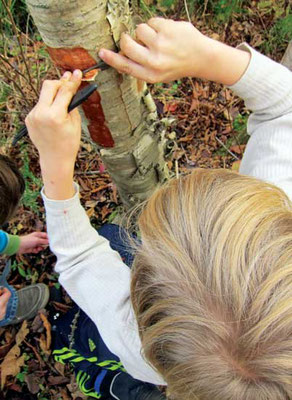 ハーブでつくるルートビアの材料は、白樺の樹皮のように多くが自然採取できる。Photo by Susan Verberg