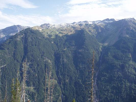 Blick auf den Sooler Wald