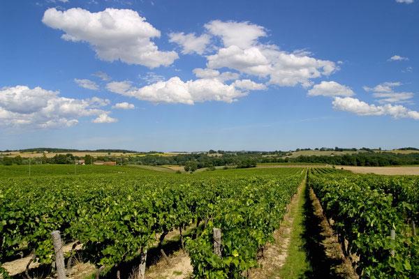 Delord vineyards